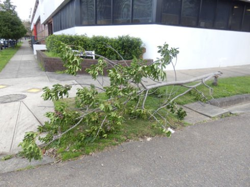 Another street tree bites the dust.