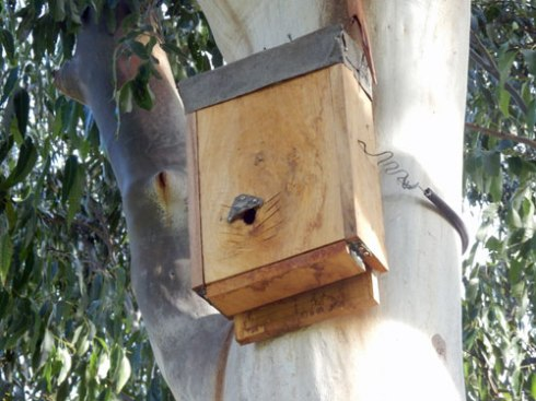 Bat box built especially to house microbats.