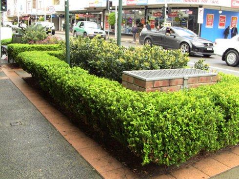 There are some lovely sections of landscaping done by Marrickville Council along the Marrickville Road shopping strip.