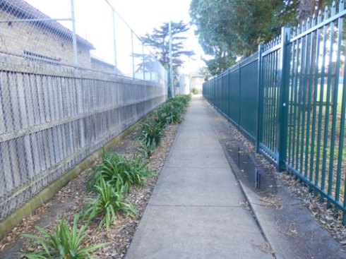 Marrickville Council have planted a pedestrian laneway in Dulwich Hill.  Greenery like this is accumulative in helping to lower heat.