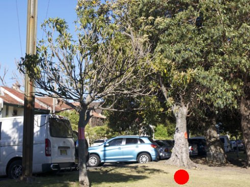 Marked by the red dot.  Another tree on the left is to be removed as well.