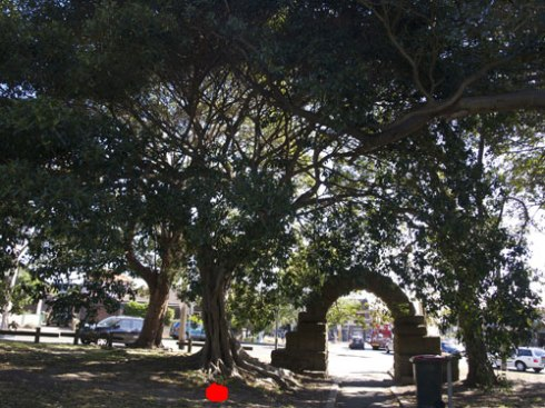 The red dot indicates the Fig tree to be removed.