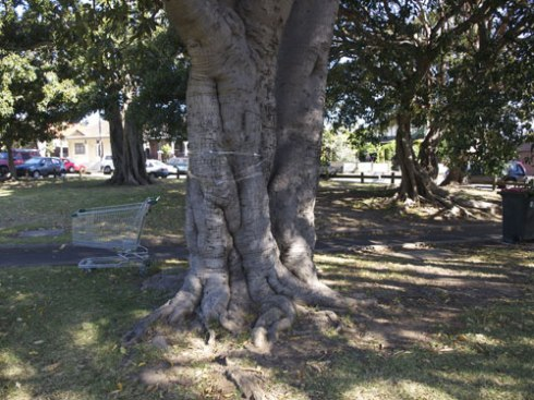 Very large trunk