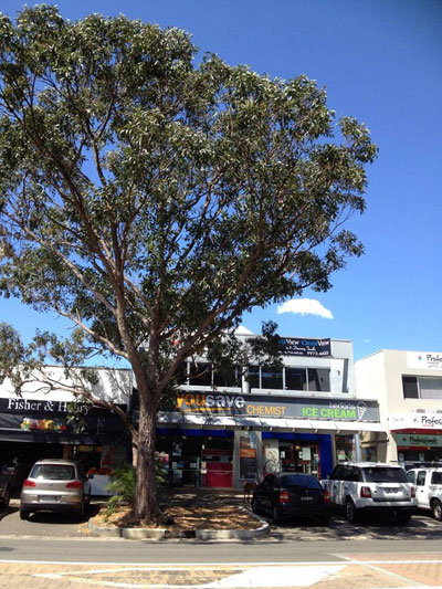 Pittwater Council gave priority to this tree outside the Avalon shops. Photo by Nina Gow with thanks :-)