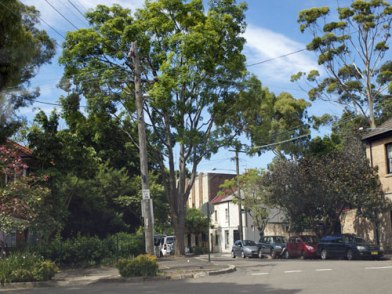 Glebe streetscape - incredibly leafy despite the high density living & narrow streets.