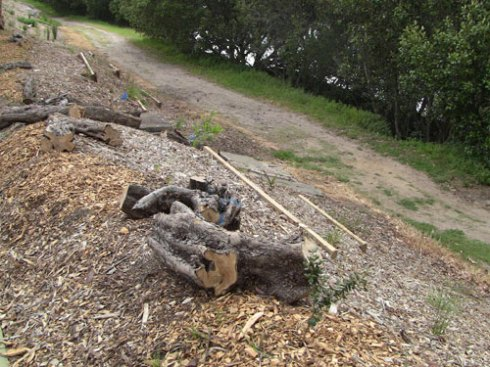 These old tree trunks will feed the soil & provide habitat for a range of small creatures.