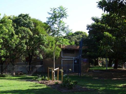 Jacaranda - advanced planting