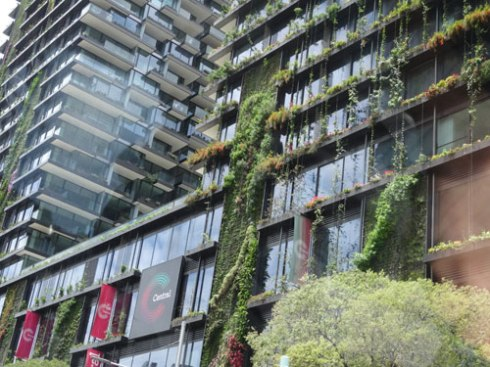 Vertical gardens that still have more growing to do.  I am impressed that all the street trees were saved.