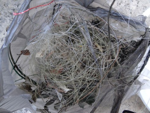 A full plastic shopping bag of discarded fishing line & hooks was collected.