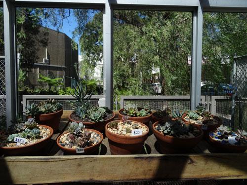 Bon Succulent Gardens