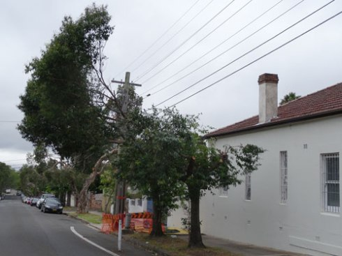 Two Lily Pilys corner of tree pruning in Renwick Street & Excelsior Parade Marrickville