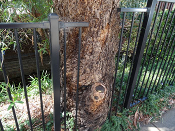 When trees mean more than fences