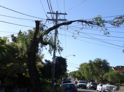 A resident said with some sarcasm that they were glad Ausgrid at least left some canopy over the street.  (Marrickville)