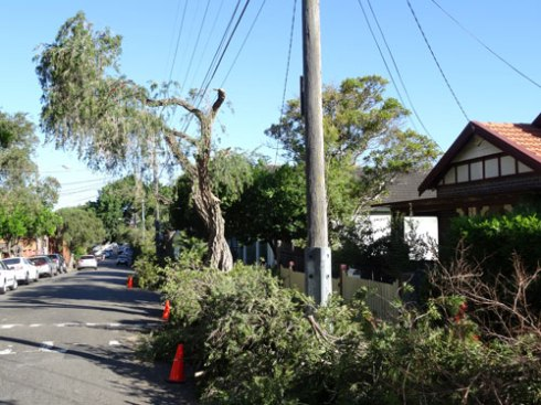 Most of the street trees are on the ground.