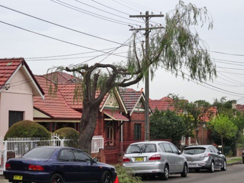 2014 street tree pruning by Augrid in Marrickville