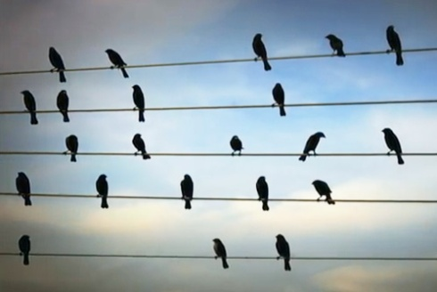 Screenshot from Birds on a Wire - with thanks.