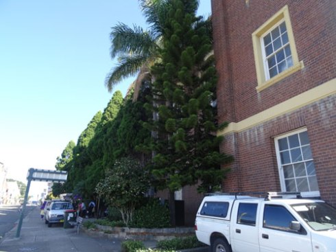 All these trees to go, except one Phoenix Palm.  None of the trees touch or have created visible damage to the building.