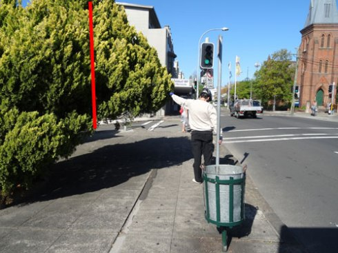 The red line shows how the tree can be pruned & return space to the footpath, instead of Council's choice to remove the tree.