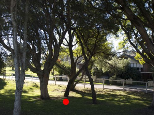 The red dot marks tree to be removed.