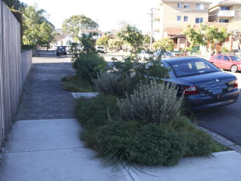 Two of the three verge gardens in Riverside Crescent Marrickville. They look terrific.
