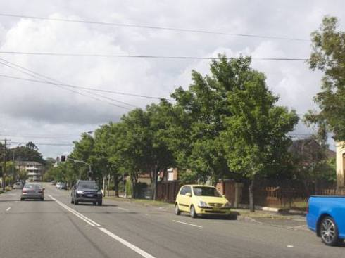 Manchurian Pear trees will be planted along most of our main roads.