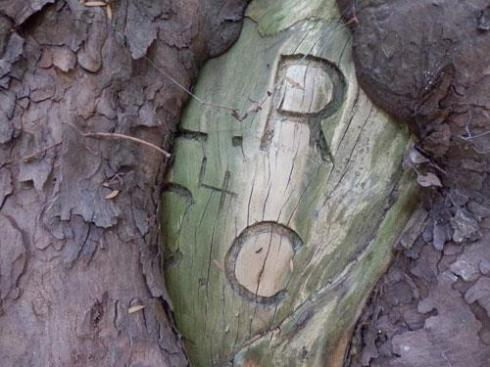 Old tree graffiti.  From my observations carving into trees is on the increase.