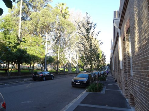The Australia Street landscaping that first caught my eye.  The Street Tree Master Plan says Council will not plant street trees opposite parks. Despite the large trees in Camperdown Park, I believe this street will look wonderful once these Poplars have grown up.