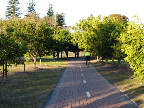 The shared pathway lined with Tuckeroos.  These are the shortest trees in the park.