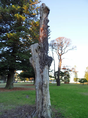 Dead trees have been left in place for their beneficial impact on local ecology.