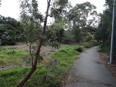The Cooks River Valley Garden looking green after the rain.