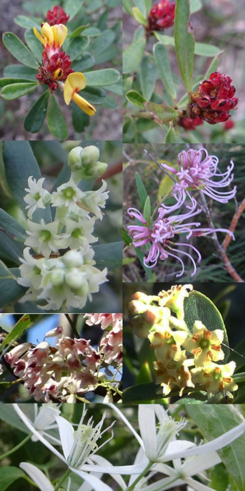 A selection of the wildflowers we saw on our bush walk.