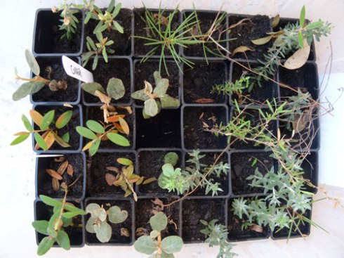 My propagated plants from when I did the workshop last May.  All, but one plant survived & I now have many more propagated plants in pots around the garden waiting to grow up.  You won't be disappointed if you do this workshop.