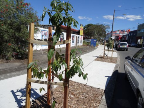 About 6 new Queenland Brushbox trees,plus verge gardens along Victoria Road Marrickville.