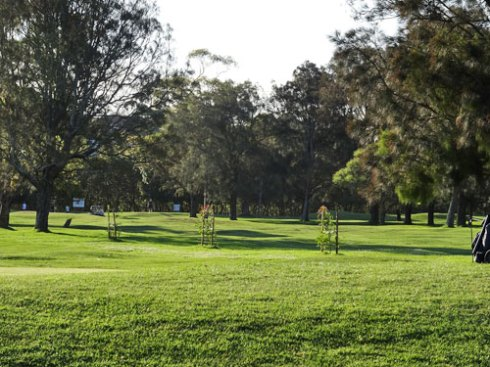 New trees for Marrickville Golf Course