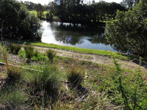 Wave Rock garden with the Cooks River behind.  This is a special spot on the Golf Course.