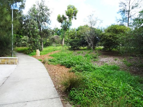 The view of the Cooks River Valley Garden from the new 'gathering area.'