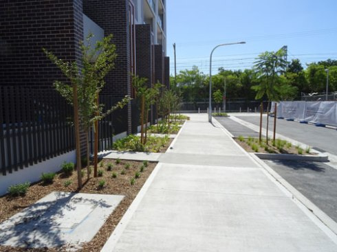 A tree outside every unit, plus a verge garden & street trees.  Before long this area will be very leafy, green, cool & shady.