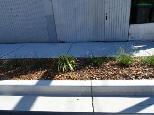 Verge garden planting at Mary Street St Peters.
