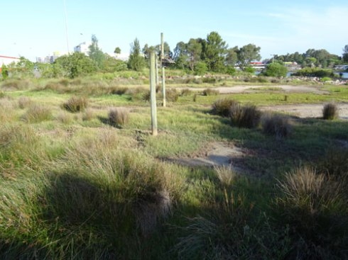 The saltwater wetland in Tempe Recreation Reserve now has purpose-built roofs for Fairy martins.