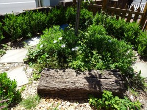 A log seat & a path that winds around the garden bed.   I like the hedge as well.