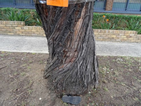 Size 7 show to give an indication of the width of the trunk.