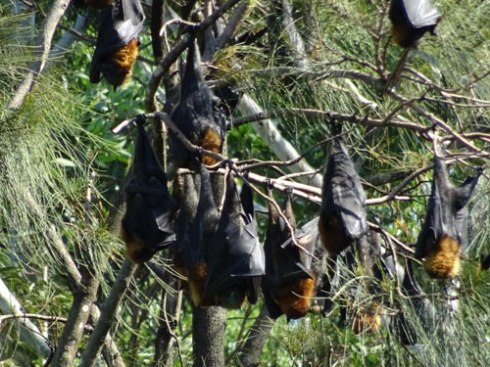 A bat huddle.