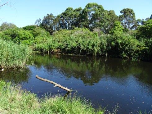 Wolli Creek looking east.