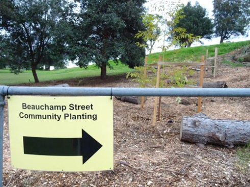 Two new trees visible just inside Marrickville Golf Course on Beauchamp Street.
