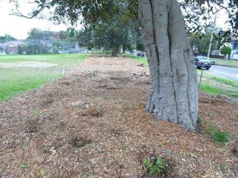 The 2012 National Tree Day site that also was planted today.
