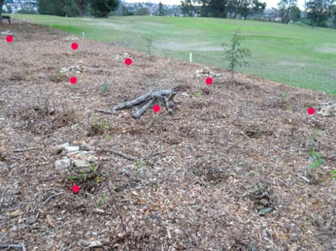 The red dots indicate a pile of sandstone bits.  Notice too the pile of twigs & small branches.  They look like little villages to me.