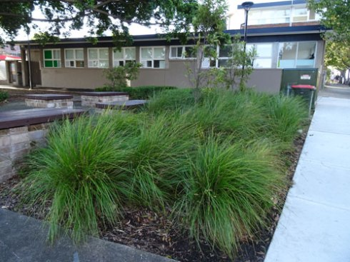 The same species of grasses just inside Memory Reserve.  It looks pretty &  I often see people sitting in this park.