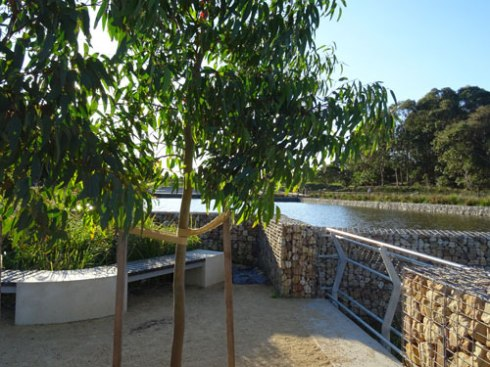 Showing the forst retention pond in the background.  Note the nice seating, gabion wall & the new tree.