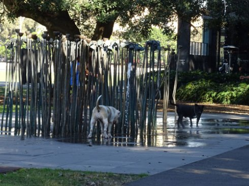 The 'Lotus Lines' water scupture was enjoyed by myself, a meditating man, some children & these dogs.