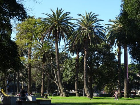 Some of these veteran Canary Island palms have a bend, which I think is rather nice.